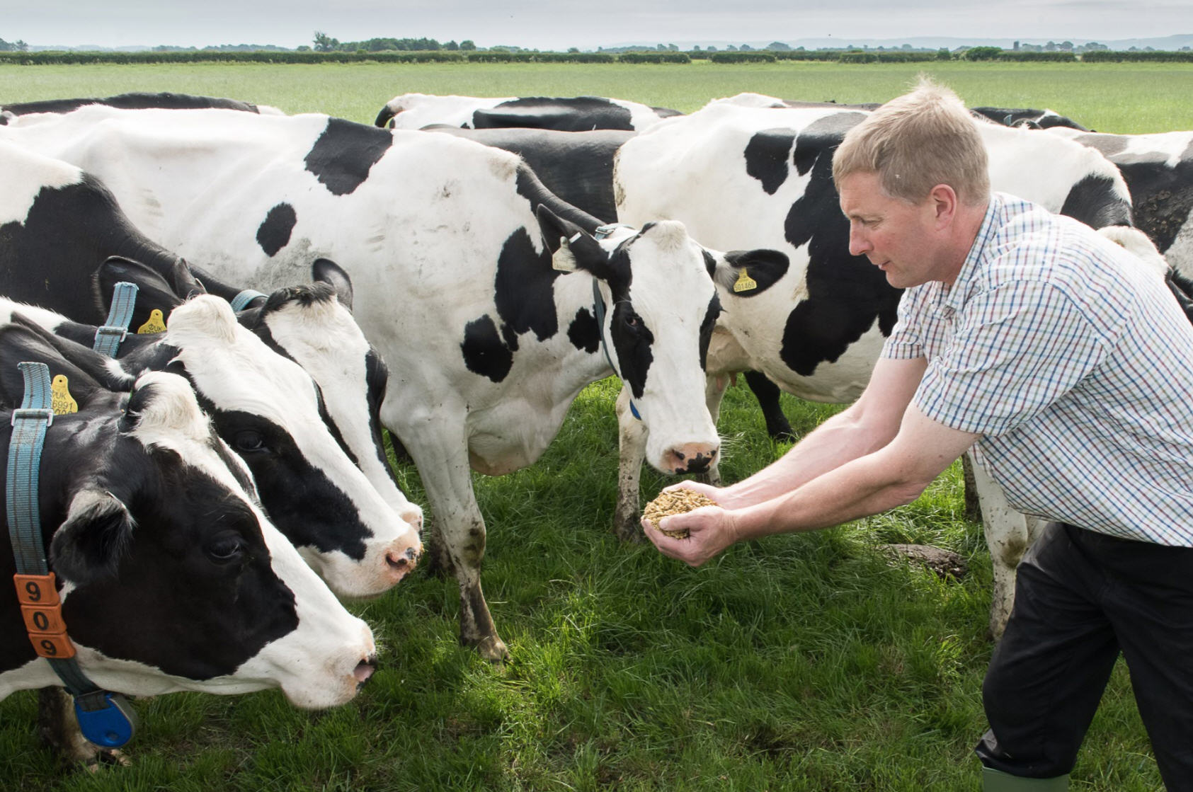 chris-stockdale-feeding-his-cows-with-nis