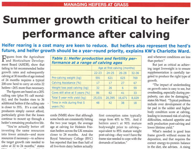 British Dairy Managing Heifers At Grass Article Image