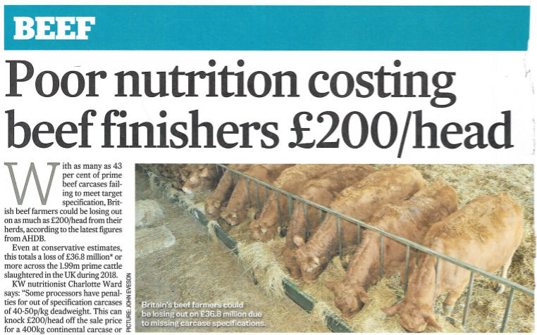 Poor Nutrition Costing Beef Finishers £200 Per Head