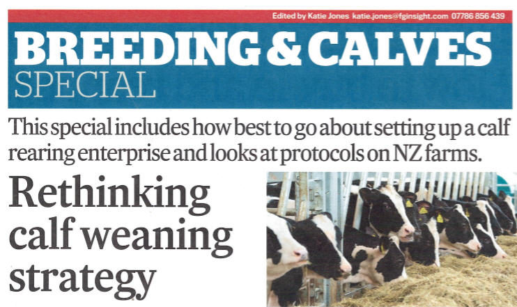 Rethinking Calf Weaning Strategy Article Image