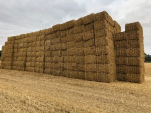 stack of 600 square straw bales
